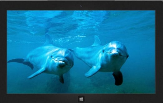 Dolphins_Windows_Theme_Download