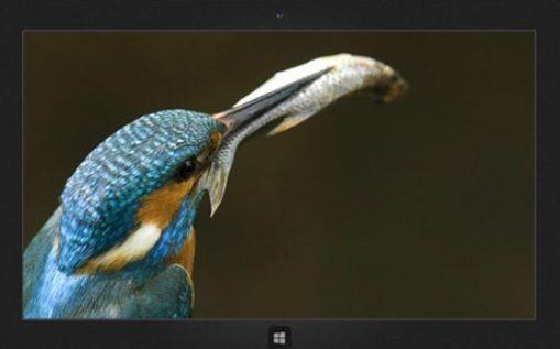 Beautiful_Birds_Windows_10_HD_Theme