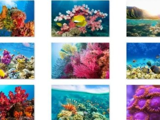 download fish and coral theme for windows