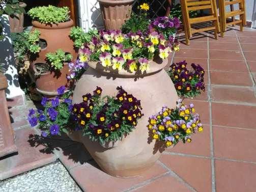 10 Piante da giardino resistenti al sole in estate