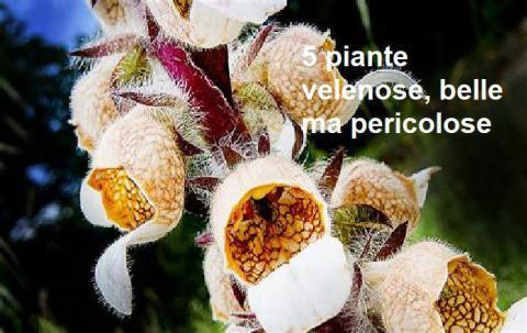 5 piante velenose, belle ma pericolose