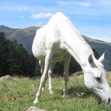 nombres de los animales en inglés y español