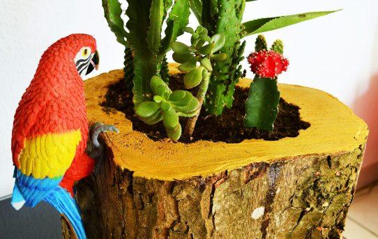 tronc bois pot cactus