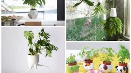 Super-pots, la révolution des plantes d'intérieur