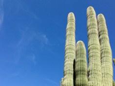 Cactus Cereus par Alan Levine