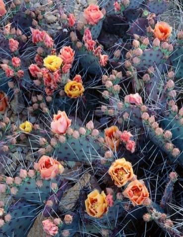 Opuntia Cactus par George H. H. Huey