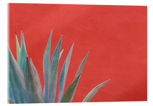 Agave devant un mur coloré de Don Paulson © Danita Delimont