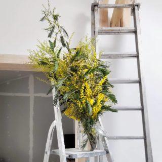 Chantier fleuri du lundi 🌼 __________________________________ #mimosa #viedechantier #travaux #renovation #fleursdhiver #springiscoming #chantier #petitsplaisirs #littlethings #maredacwebpetitsplaisirs