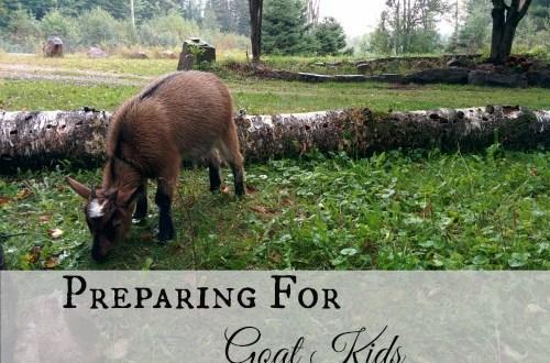 Preparing for Goat Kids