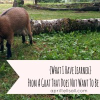 What I Have Learned From A Goat That Does Not Want To Be Milked