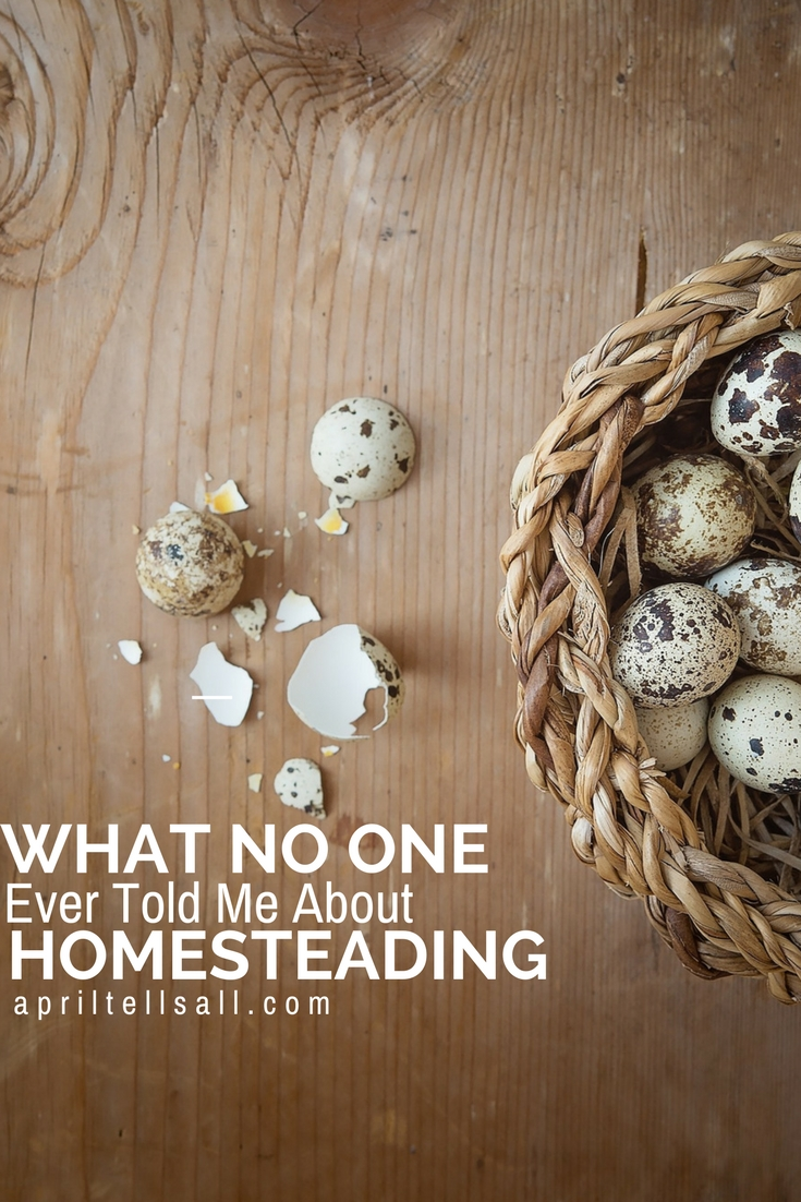 What No One Ever Told Me About Homesteading