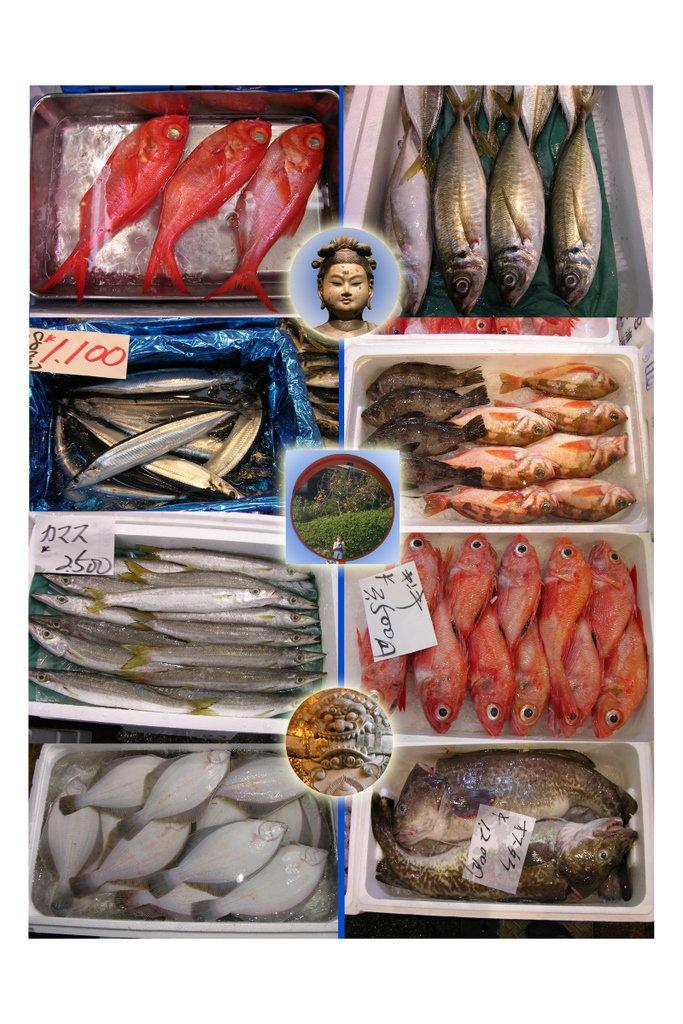 japan-fish3pix