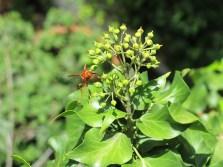 bright orange wasps inhabited the garden