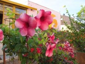 Alma del Sol roof garden