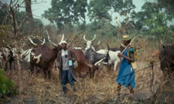 OPSH Bans Grazing In Bauchi, Plateau States