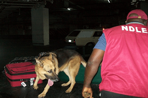 'Pregnant' Woman Nabbed With Cocaine In Lagos