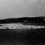 Patinhos na lagoa