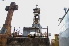 O Cemitério da Saudade e uma de suas peculiaridades, os gatos. Foto: Benedito Adilson Zavarize – MTB 69022