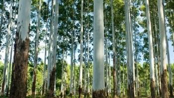"""2º Simpósio """"O eucalipto em sistemas agroflorestais"""""""