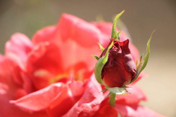 Florescer – Cynthia da Rocha
