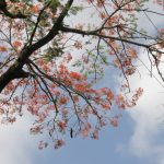 Abraço no céu – Cynthia da Rocha