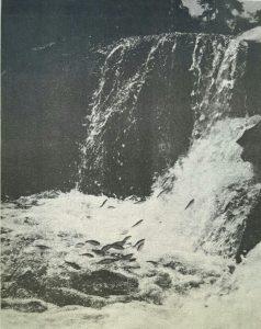 Uma foto que conquistou o país: tempo de Piracema