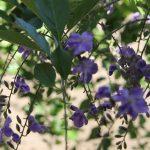 Flor – Cynthia da Rocha