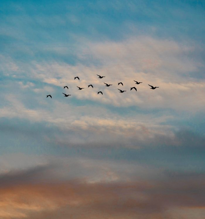 photo-of-a-flock-of-flying-birds-1553463_recorte-2