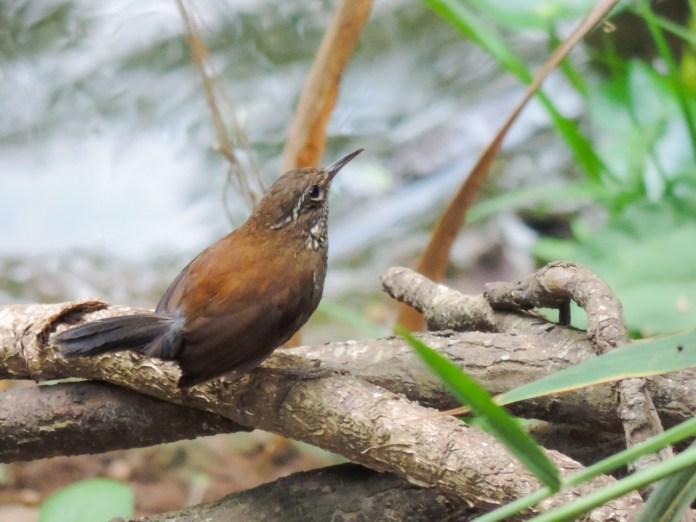 No Horto de Tupi, o pássaro João Porca. (foto: Valdir Felipe)