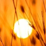 pexels-darwis-alwan-1454752_horiz_recort