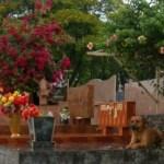 Causos de cemitério (3)