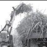 Estação experimental criada para apoio à cana de açúcar