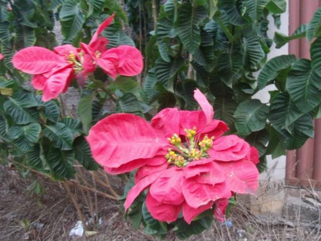 Flor excêntrica