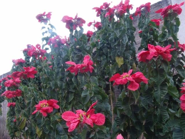 A exótica flor