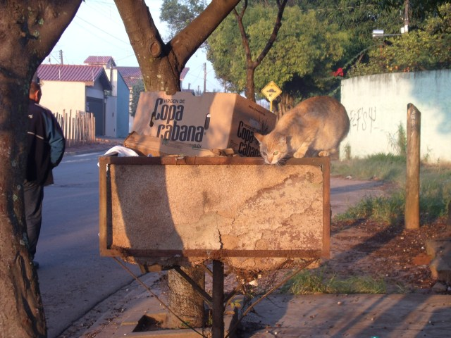 Gato maroto