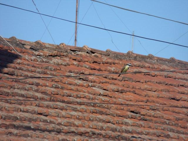 No telhado