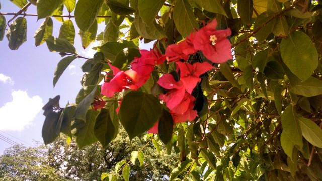 Céu, folhas e flor