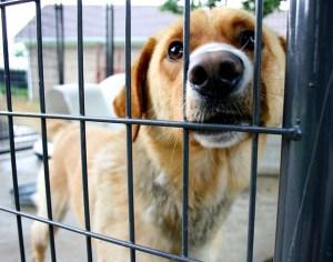 desconto-iptu-quem-adotar-animais-abandonados-600