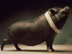 Porco com pérolas