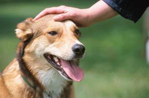 cachorro-recebendo-carinho-03-500x329