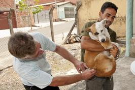 vacina cachorrada jj5ss