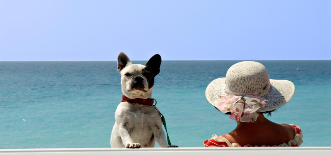Ferienhaus Mit Hund in Apulien