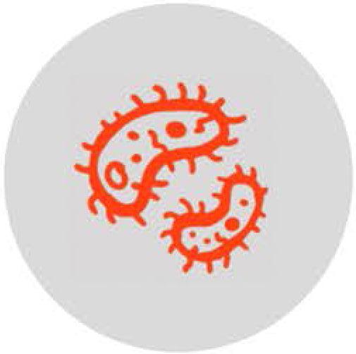 4- Bacterias