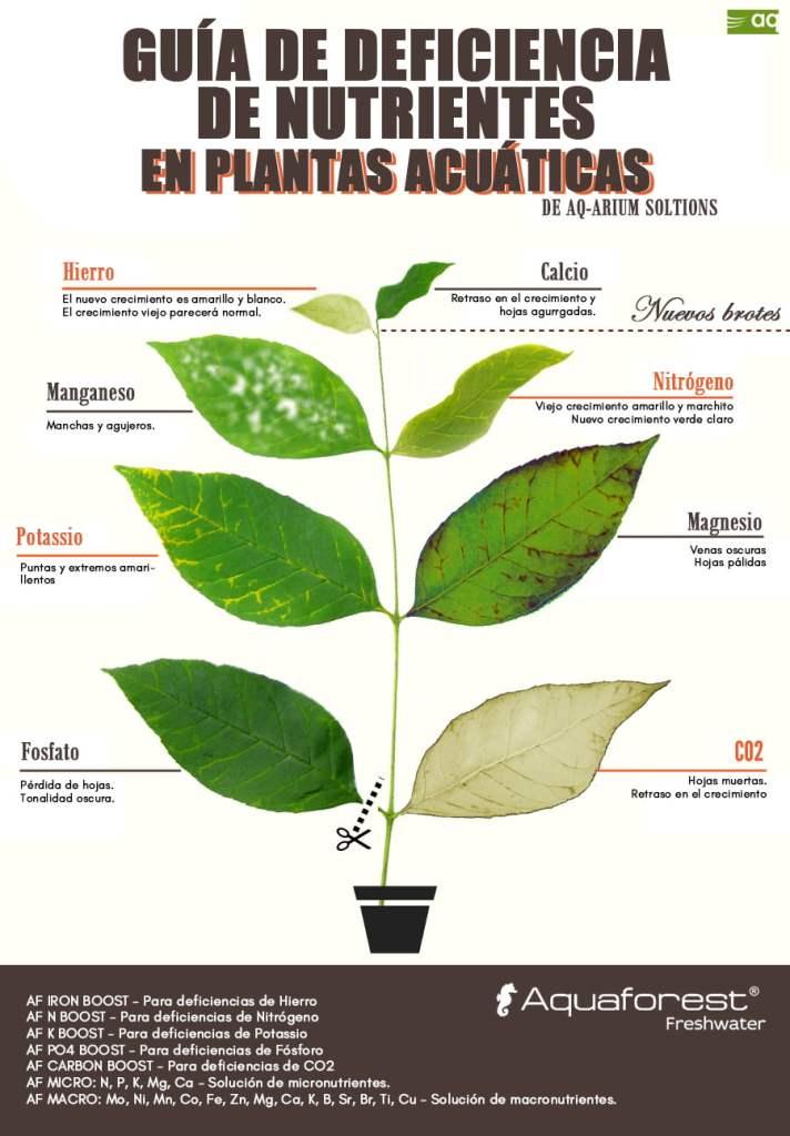 Deficiencia de nutrientes en las plantas