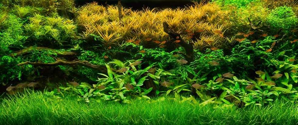 aquariumplanten beplant aquarium