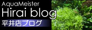 平井店ブログ