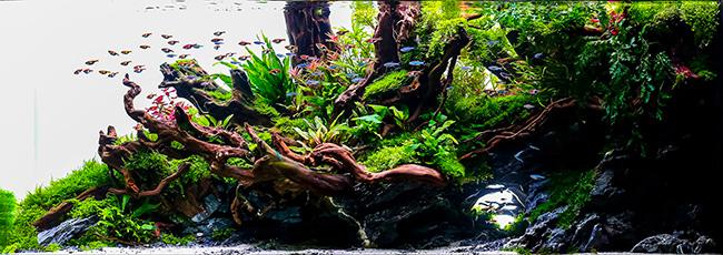 racines naturelles pour aquarium aqua