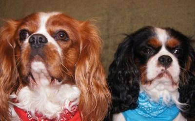 Vlasnici pasa često se bave problemima sa proljevom i raznim vrstama alergija.