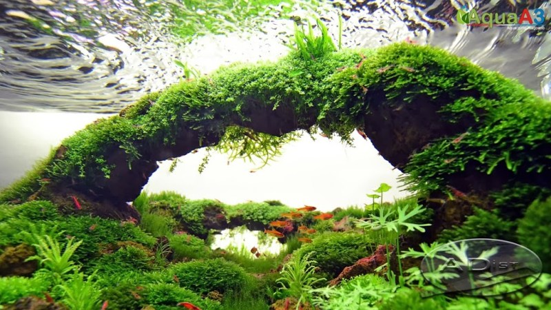 Aquascaping History of Owachomo