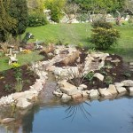 Wildlife pond: Plants are carefully selected to offer variety and function